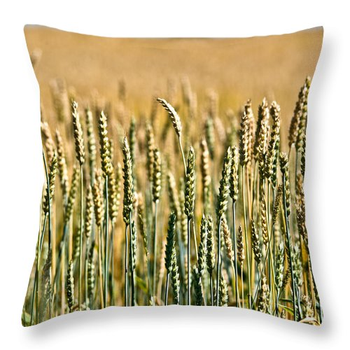 Wheat Throw Pillow featuring the photograph Field Of Gold by Cheryl Baxter