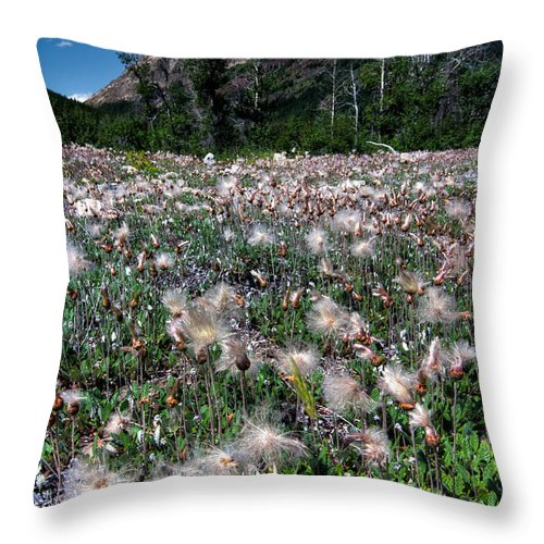 Alberta Throw Pillow featuring the photograph Field Of Seeding Flowers by James Wheeler