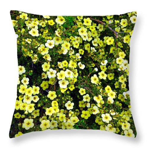 Flowers Throw Pillow featuring the photograph Field Of Suns by Robert Meyers-Lussier