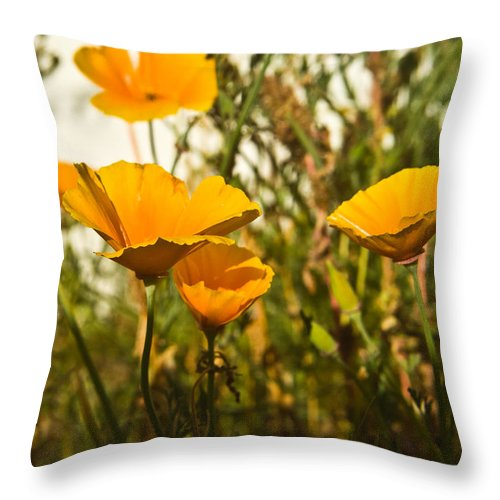 Poppy Throw Pillow featuring the photograph Field Of Yellow Poppies by Douglas Barnett