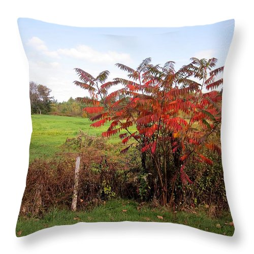 Field Throw Pillow featuring the photograph Field With Sumac In Autumn by MTBobbins Photography