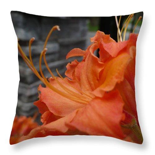 Orange Throw Pillow featuring the photograph Fiery Orange Azalea by Nicki Bennett