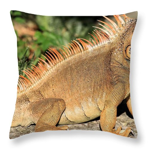 Iguana Throw Pillow featuring the photograph Fiery Red by Adam Jewell