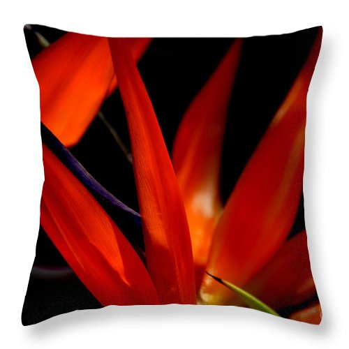 Bird Of Paradise Throw Pillow featuring the photograph Fiery Red Bird Of Paradise by Susanne Van Hulst