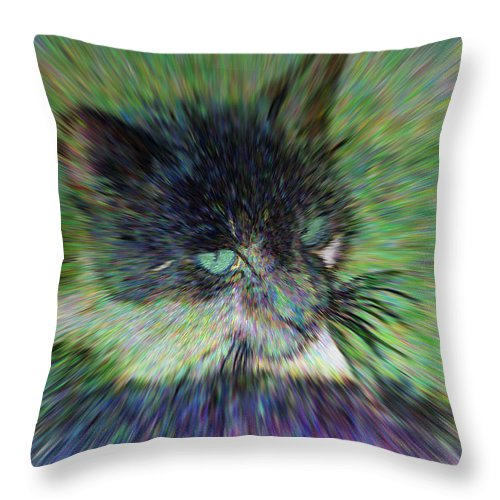 2d Throw Pillow featuring the photograph Filtered Cat by Brian Wallace