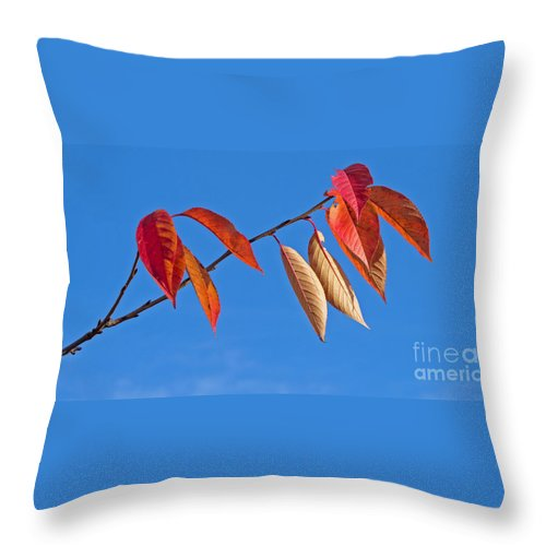 Autumn Throw Pillow featuring the photograph Final Fling by Ann Horn