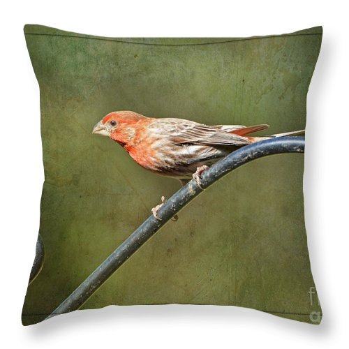Nature Throw Pillow featuring the photograph Finch On Guard I by Debbie Portwood