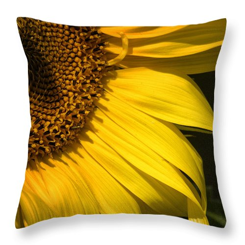 Sunflower Throw Pillow featuring the photograph Find The Spider In The Sunflower by Belinda Greb