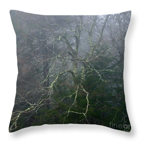 Fall Throw Pillow featuring the photograph Fire Cherry In Mist by Thomas R Fletcher