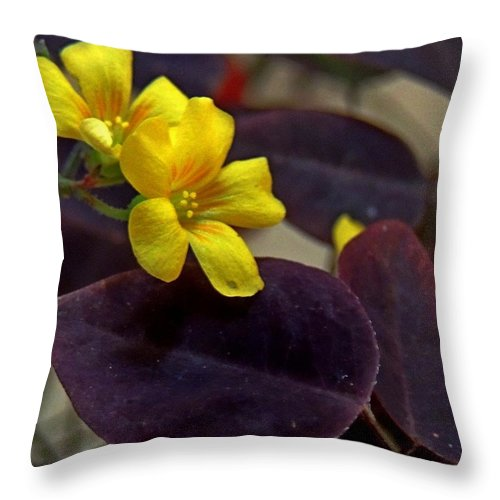 Oxalis Hedysaroides Throw Pillow featuring the photograph Fire Fern by Denise Clark