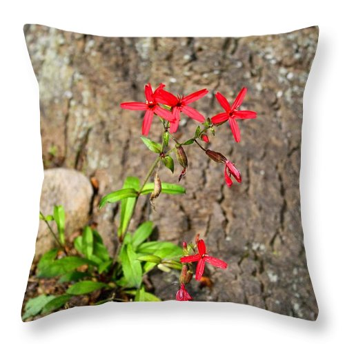 Pink Throw Pillow featuring the photograph Fire Pinks by Kathryn Meyer