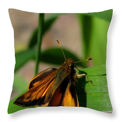 Firey Skipper Butterfly North American Butterfly Species Small Orange And Black Butterfly Invertebrates Throw Pillow featuring the photograph Fire Skipper by Joshua Bales