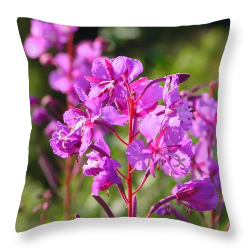 Fire Throw Pillow featuring the photograph Fire Weed 3 by Lew Davis