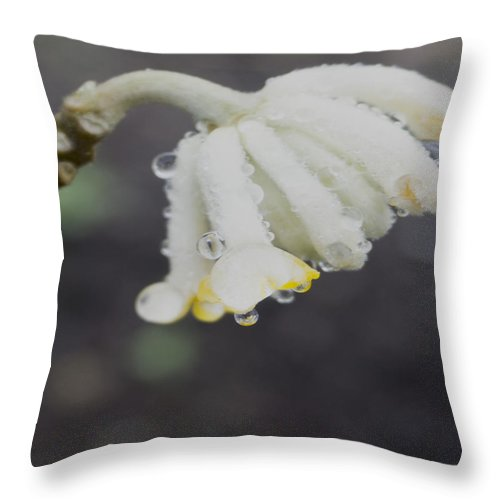 Throw Pillow featuring the photograph First Blossom by Cathy Anderson
