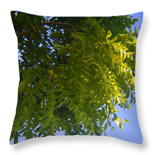 Walnut Throw Pillow featuring the photograph First Walnut Fruit 2014 by Tina M Wenger