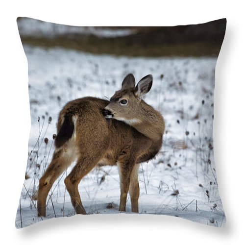 Fawn Throw Pillow featuring the photograph First Winter by Belinda Greb