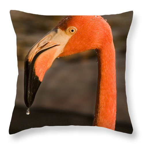 3scape Photos Throw Pillow featuring the photograph Flamingo by Adam Romanowicz