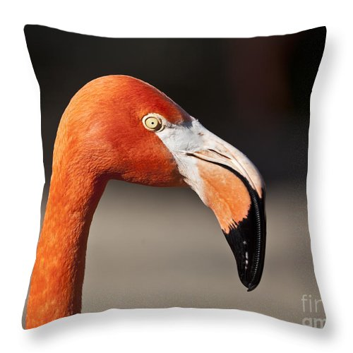 Caribbean Flamingo Throw Pillow featuring the photograph Flamingo Portrait by Liz Leyden