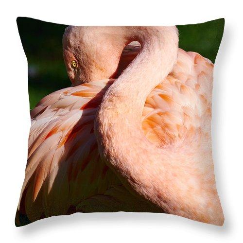 Atlantic Ocean Throw Pillow featuring the photograph Flamingo Twist by Jouko Lehto