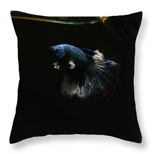 Fish Throw Pillow featuring the photograph Fleabag by Susan Herber