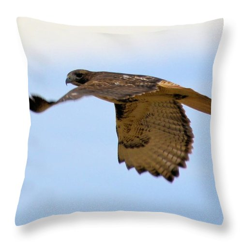 Hawk Throw Pillow featuring the photograph Flight Of The Hawk by Bonfire Photography