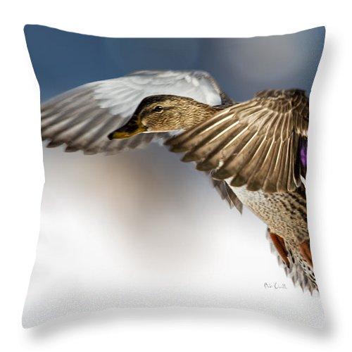 Duck Throw Pillow featuring the photograph Flight Of The Mallard by Bob Orsillo