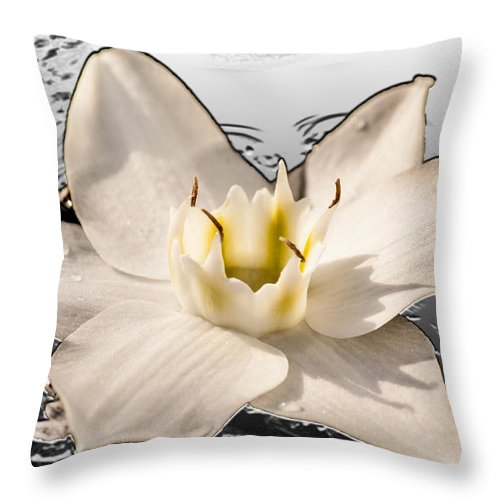 Lily Throw Pillow featuring the photograph Floating Lily by Melvin Busch