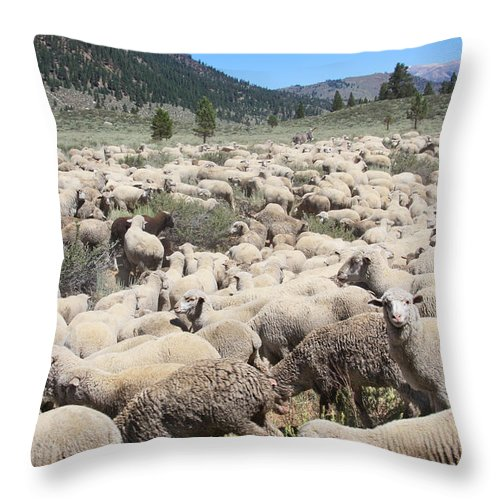 Large Group Of Animals Throw Pillow featuring the photograph Flock Of Sheep by Melinda Fawver