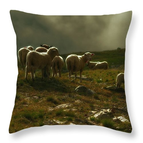Color Efex Pro Throw Pillow featuring the photograph Flock Of Sheep by Roberto Pagani