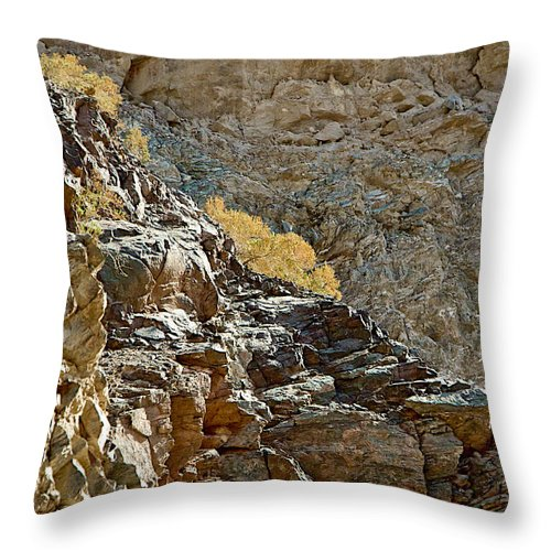 Flora In Sunlight In Big Painted Canyon Trail In Mecca Hills Throw Pillow featuring the photograph Flora In Sunlight In Big Painted Canyon Trail In Mecca Hills-ca by Ruth Hager