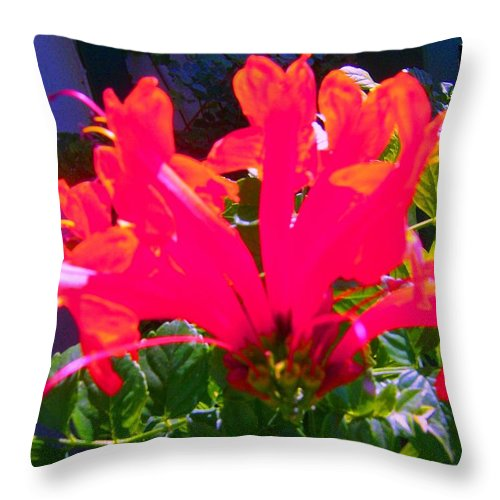 Flower Blossom Throw Pillow featuring the photograph Floral 6 by Dan Twyman