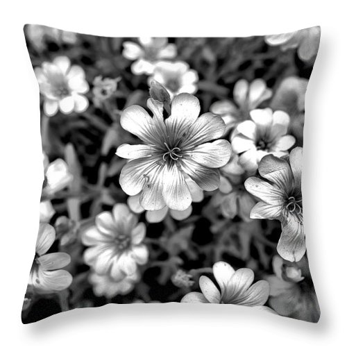 Floral Throw Pillow featuring the photograph Floral Drama by Robert Meyers-Lussier