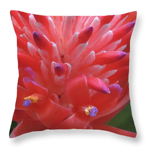 Bromeliad Throw Pillow featuring the photograph Floral Fireworks by Denise Clark