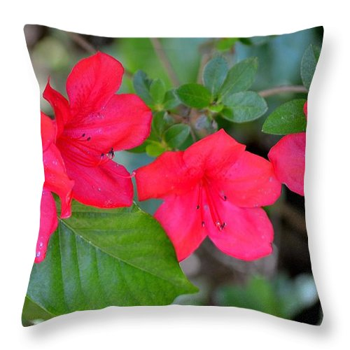 Flora Throw Pillow featuring the photograph Floral Hedge by Tara Potts