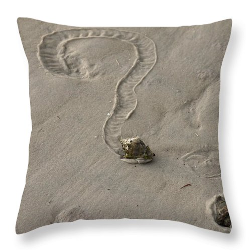 Florida Crown Conch Throw Pillow featuring the photograph Florida Crown Conch Photo by Meg Rousher