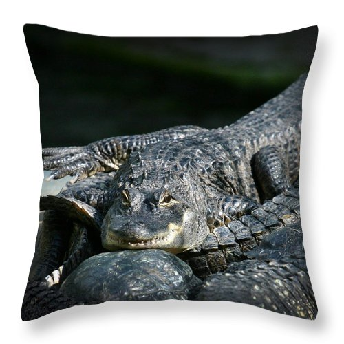 Florida Throw Pillow featuring the photograph Florida Gator by Anthony Jones