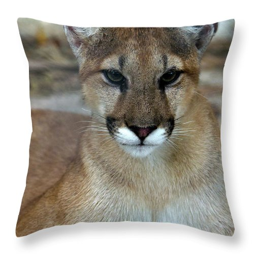 Animal Themes Throw Pillow featuring the photograph Florida Panther, Endangered by Mark Newman