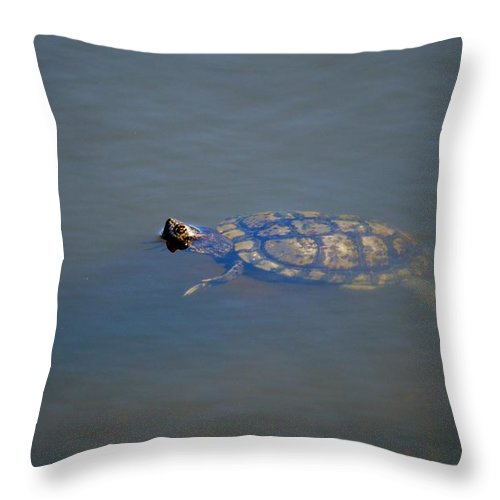 Turtle Throw Pillow featuring the photograph Florida Turtle by Linda Kerkau