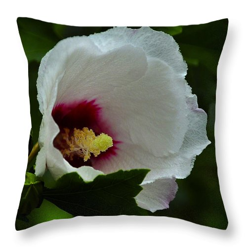 Abundance Throw Pillow featuring the photograph Flower 157 by Ingrid Smith-Johnsen