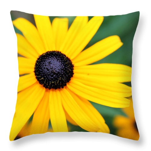 Flower Throw Pillow featuring the photograph Flower by Chloe Shackelton