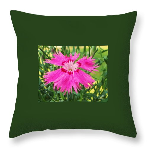 Flower Throw Pillow featuring the photograph Flower Pink by Eric Schiabor