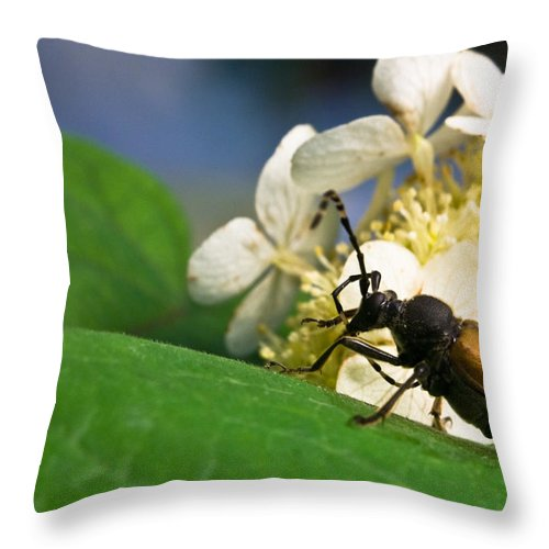 Beetle Throw Pillow featuring the photograph Flower Rise Over Beetle by Douglas Barnett