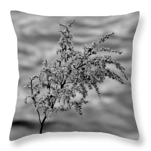 Black And White Throw Pillow featuring the photograph Flower Weed by Michele Nelson