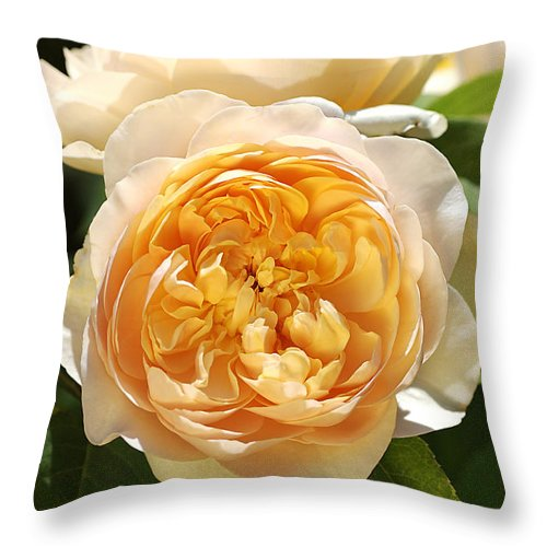 Flower Throw Pillow featuring the photograph Flower-yellow Roses by Joy Watson