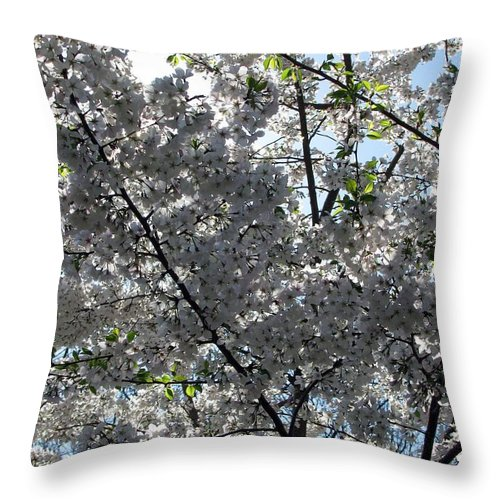 Flowering Cherry Throw Pillow featuring the photograph Flowering Cherry - White by Pamela Critchlow