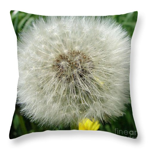 Fluffy Throw Pillow featuring the photograph Fluffy by Carol Lynch