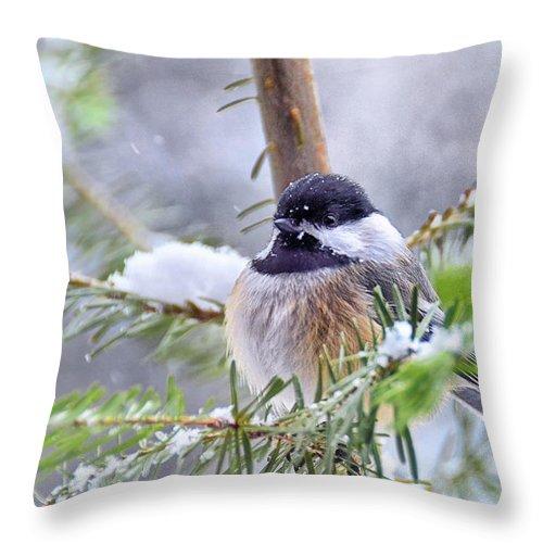 Chickadee Throw Pillow featuring the photograph Fluffy Chickadee by Peg Runyan