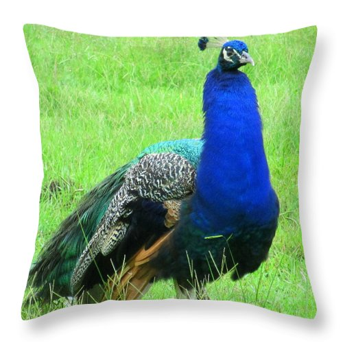 Peacock Throw Pillow featuring the photograph Fluffy Neck by Randall Weidner