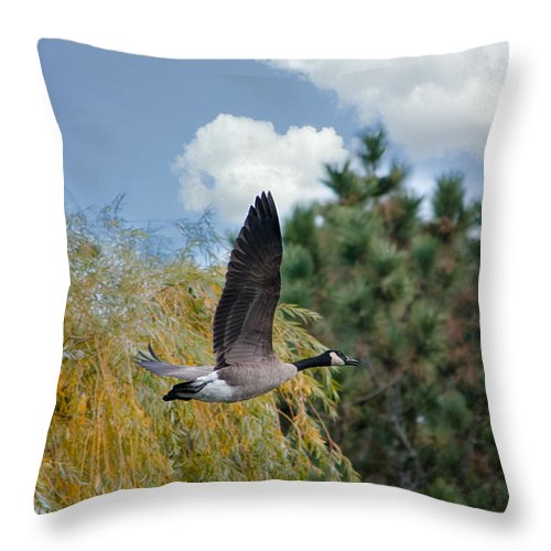Canadian Goose Throw Pillow featuring the photograph Fly Away by Susan McMenamin