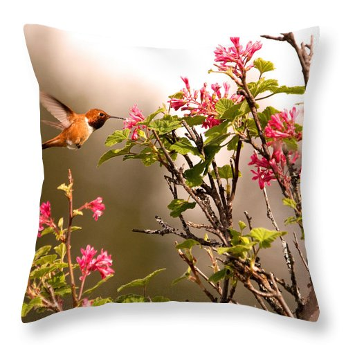 Hummingbirds Throw Pillow featuring the photograph Flying Hummingbird Sipping Nectar by Peggy Collins